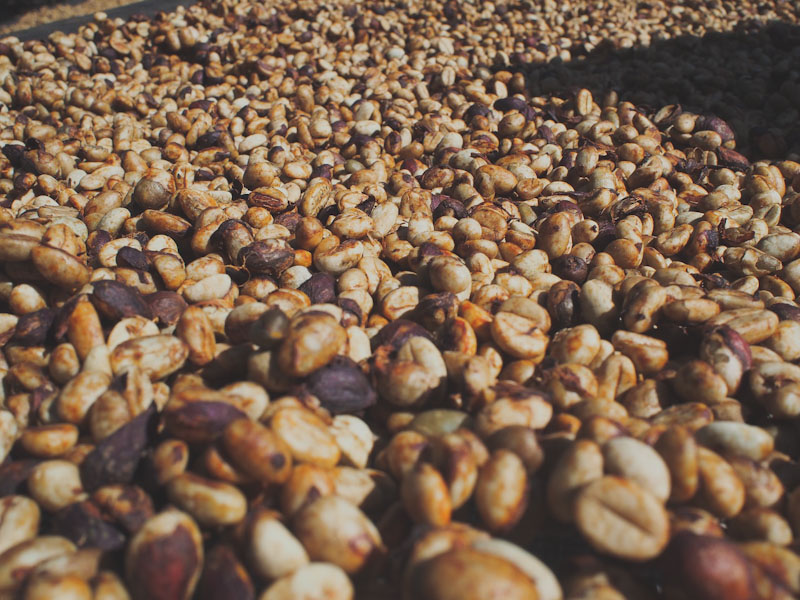 HONEY PROCESSED COFFEE_Sabores - Flavours of Colombia
