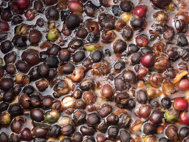 Carbonic Maceration_Sabores - Flavours of Colombia
